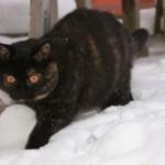 Moneypenny november 2010 i sneen