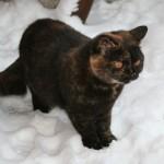 Musse i sneen november 2010