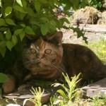 DK Gugs Killah i skygge under busk